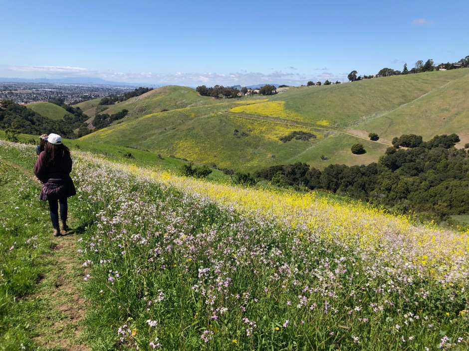 Bay Area Hills